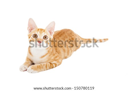smiling cat looking up - stock photo