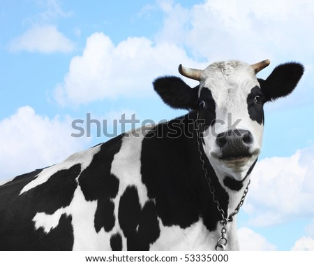 Smiling cow over blue sky background - stock photo