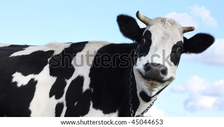 Smiling cow over sky background - stock photo