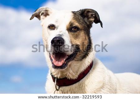 Smiling Dog against blue, sunny sky - stock photo