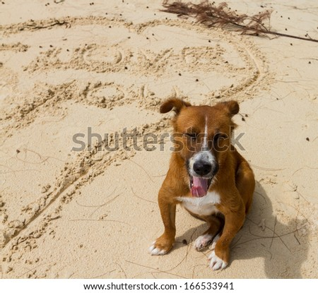 "smiling dog on the beach with word ""love you"" on sand"