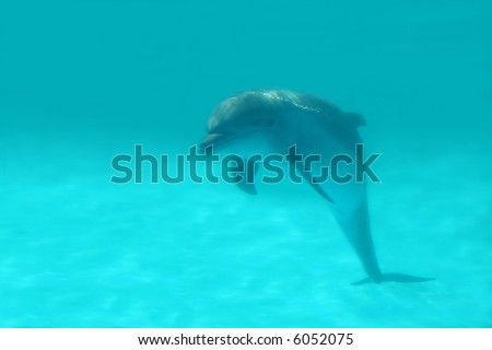 Smiling Dolphin - stock photo