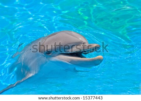 smiling dolphin looking out of the water - stock photo