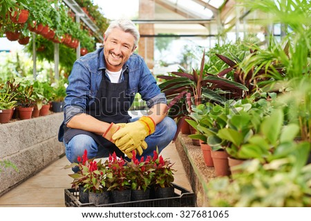 Smiling elderly gardener sitting with crate of woolflower in a greenhouse - stock photo
