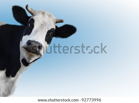 Smiling funny cow on a blue background - stock photo