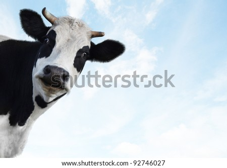 Smiling funny cow on a blue sky background - stock photo