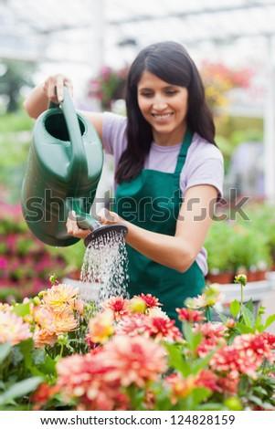Smiling garden center worker watering plants in garden centre - stock photo