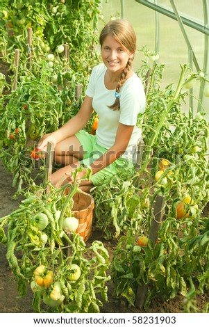 Smiling girl picking tomato in the hothouse