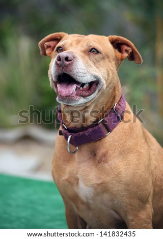 Smiling happy dog posing for her picture while sitting on a dock - stock photo