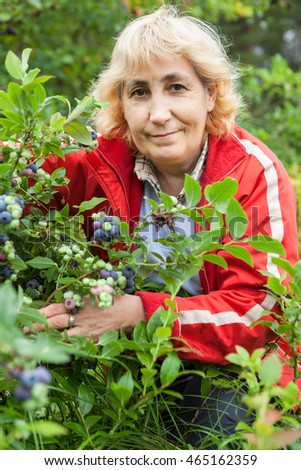 Smiling mature woman collects berries of ripe blueberry from bush in the garden