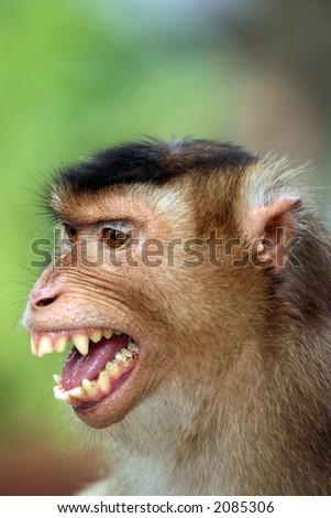 Smiling Monkey - stock photo