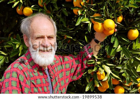 Smiling old farmer presents his orange tree fruits. Shot on N7 highway, near Citrusdal, Western Cape, South Africa. - stock photo