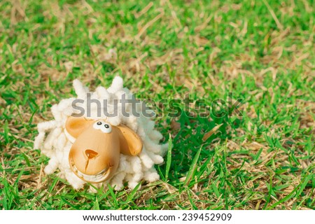 Smiling sheep on grass