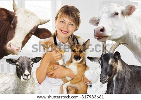 smiling vet  and animal  in clinic - stock photo