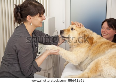 smiling veterinarian fondling a golden retriever to becalm it for an upcoming ultrasonic examination - stock photo