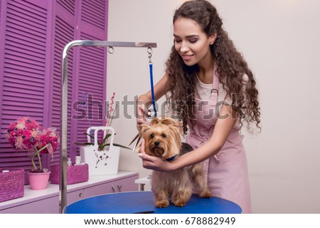 smiling young professional groomer holding scissors while grooming dog in pet salon