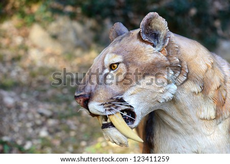 Smilodon - Saber Tooth Tiger, artificial model photographed outdoor - stock photo