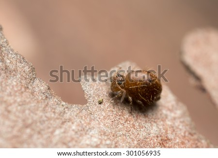 Sminthuridae springtail, extreme close-up with high magnification, copy space in the photo - stock photo