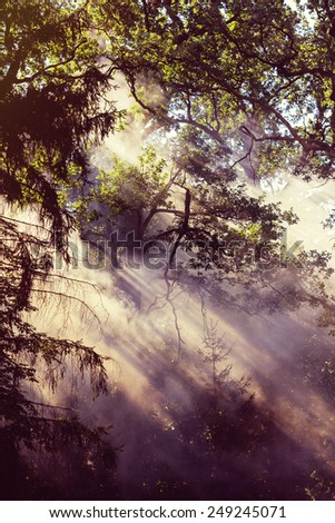 Smoke from a forest fire rises through the trees. Sunlight filters through the haze. - stock photo