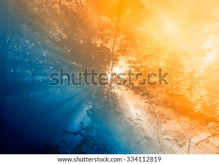 Smoke from a forest fire rises through the trees. Sunlight filters through the haze. Color styling - stock photo