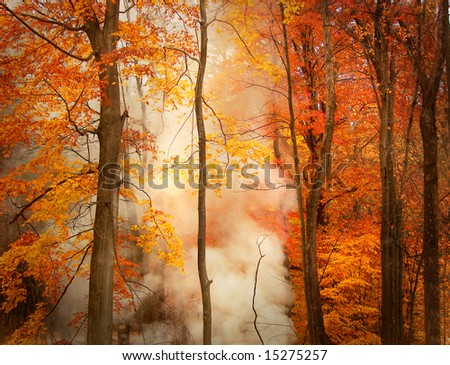 Smoke in autumn forest - stock photo