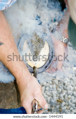 Smoke rises as the farrier places the hot shoe on the horse's hoof. Shallow dof - stock photo