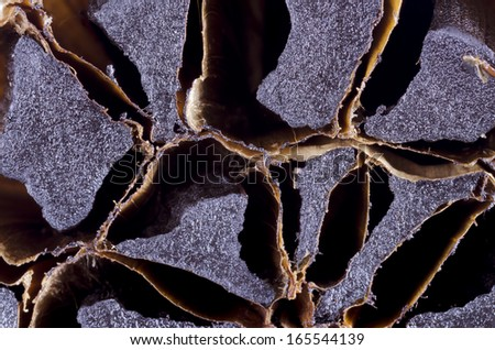 Smoked garlic detail showing cross section of black cloves - stock photo