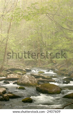 Smoky Mountains Stream with Dogwood blooms in fog. - stock photo