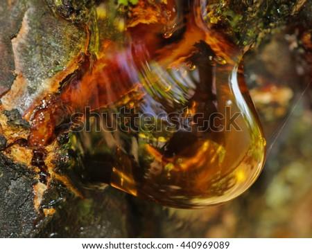 Smooth resin,  interesting ephemera on  tree - stock photo