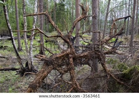 snag after the forest fire - stock photo