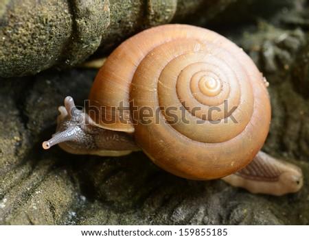 Snail - stock photo
