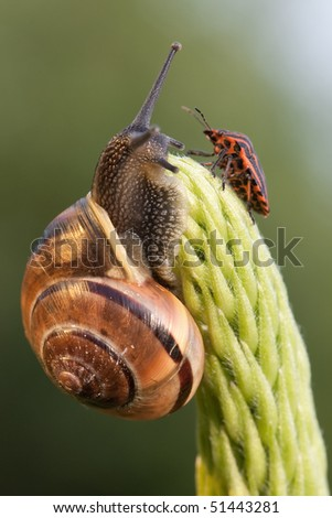 Snail and ch inch bug meet on the green plant - stock photo