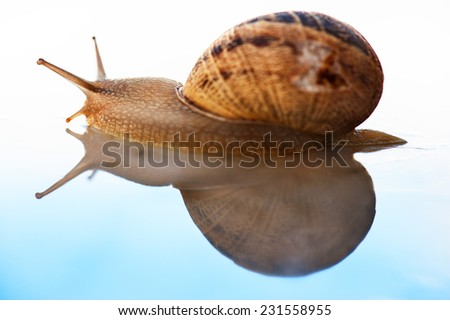 Snail and its reflection in a blue gradient background