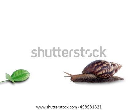 Snail and leaf, isolated on white background