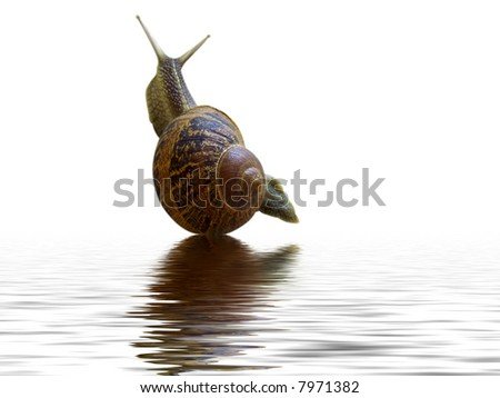 snail and reflection in water - stock photo