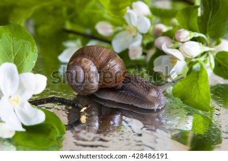 snail and white apple flowers