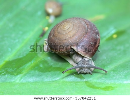 Snail  animal is benefit and pest / Select focus