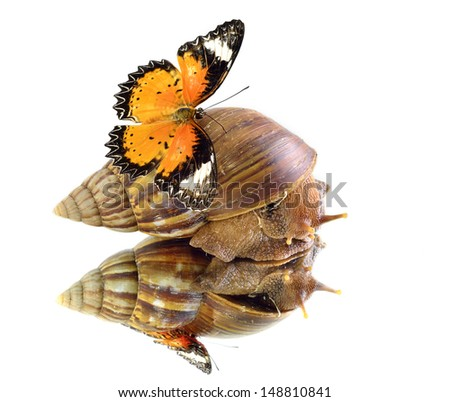 Snail carrying Leopard Lacewing butterfly with perfect reflection in shadow - stock photo