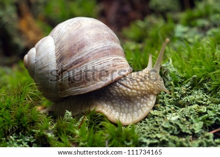 snail close up - stock photo