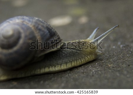 Snail closeup on brown background