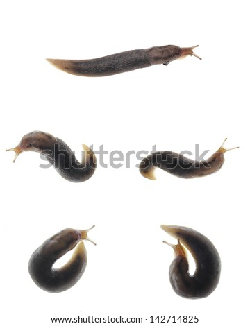 Snail collection isolated over white - stock photo