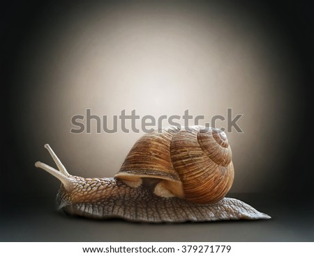 Snail. Concept graphic in soft vintage style. - stock photo
