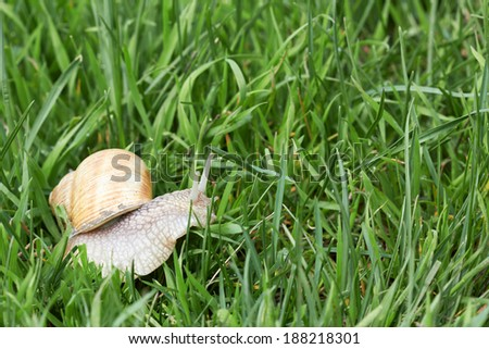 Snail crawling in the spring of fresh green grass - stock photo