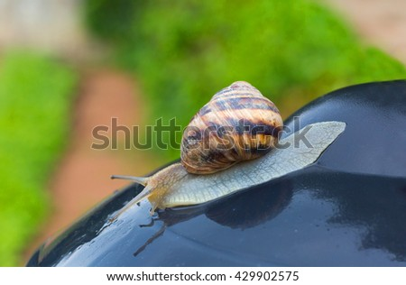 Snail crawling on a wet surface
