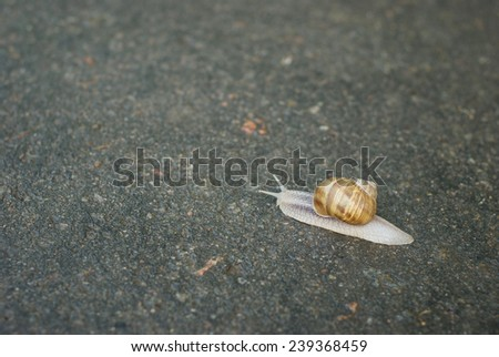 Snail crawling on asphalt - stock photo