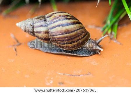 Snail crawling on the floor, Thailand - stock photo