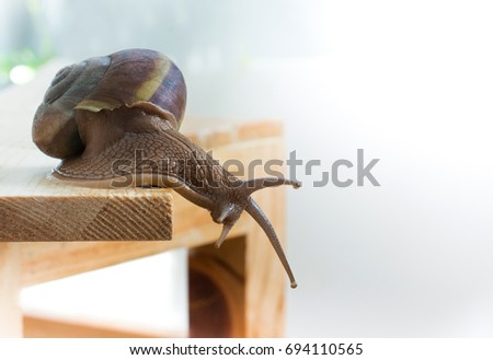 Snail crawling on wood, isolated on white background