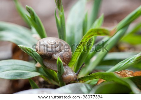 Snail Crawling through Plant