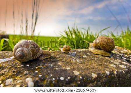 Snail family on the trip, funny holiday theme - stock photo