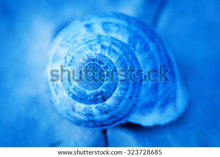 Snail house , artistic toned, shallow depth of field photo